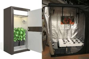 Grow Tent vs. Grow Box: What's Better For Indoor Growing