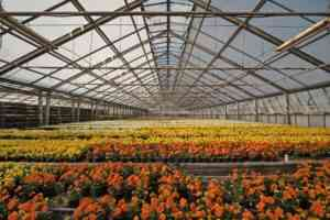 How to Lower Humidity in Grow Tent before it affects crop productivity